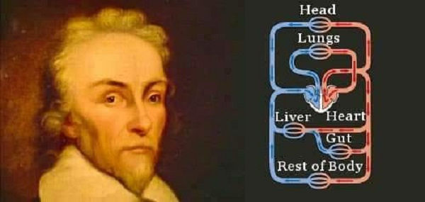 Ceaseless motion: William Harvey's experiments in circulation